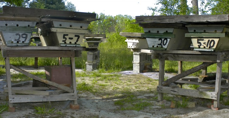 top-bar hives in an apiary