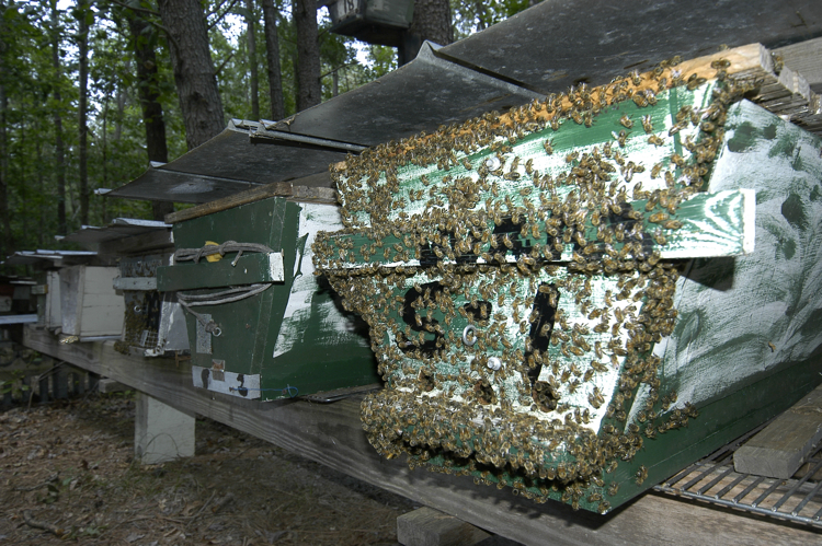 top-bar hives on a linear stand