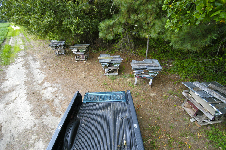 backing the truck up to top-bar hives arranged in a row to load them