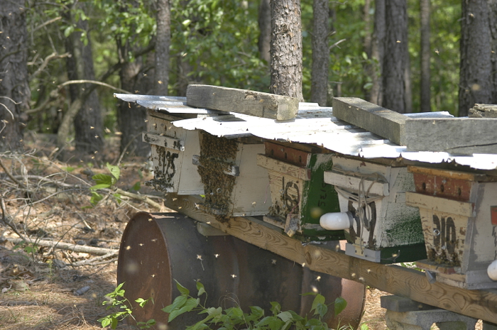 top bar hives in a row