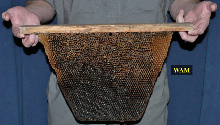 Opening Hives - 200 Top Bar Hives: The Low-Cost ...