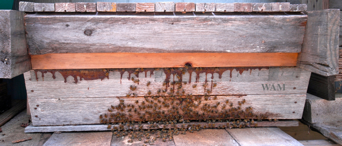 top bar hive made from scrap wood, close up