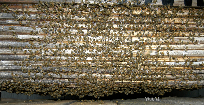 top bar hive made from sun flower stalks, a close up