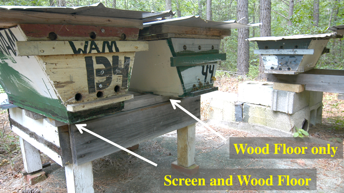 screen and wood floor top bar hives seen from the front