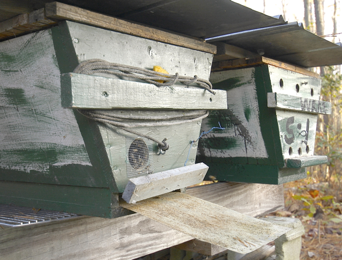 a sticky board partly removed at the back of the hive