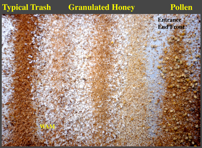 pollen and granulated honey on a sticky board