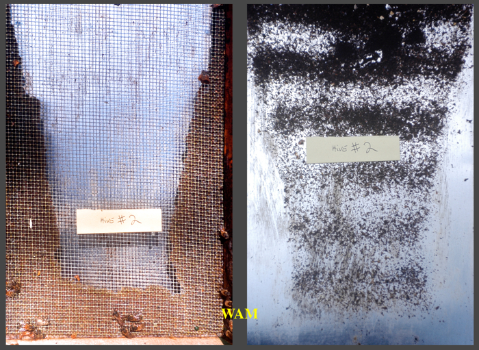 propolis in the floor screen