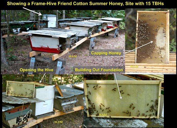 cotton nectar coming in a frame hive