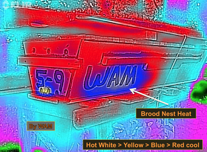 thermal image of a top bar hive, second picture