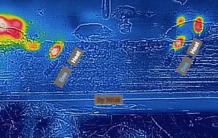 thermal image of worker bees leaving the hive