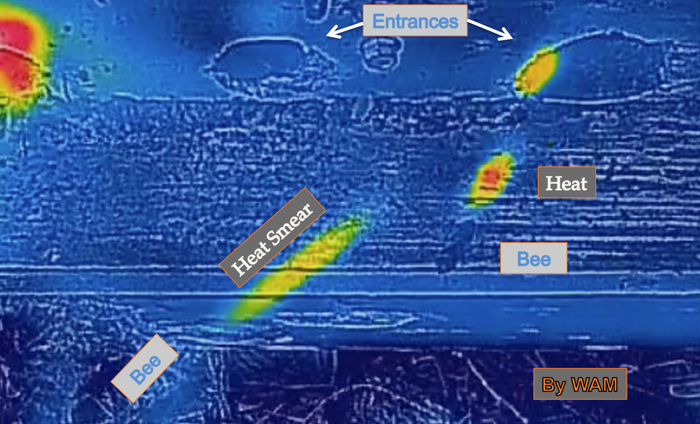 thermal image of worker bees flying away from the hive