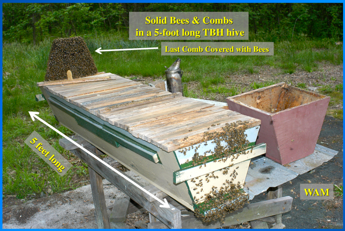 Top-Bar Apiaries - 200 Top Bar Hives: The Low-Cost ...