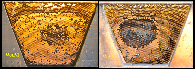 How To Open A Top Bar Hive 200 Top Bar Hives The Low