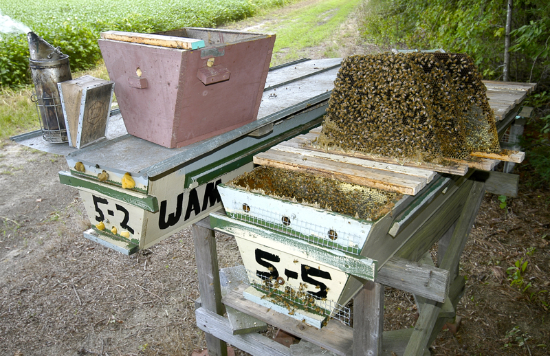 How to Open a Top Bar Hive - 200 Top Bar Hives: The Low ...